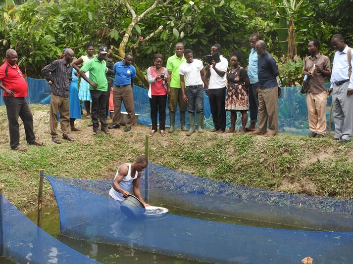 The Western Region Coastal Foundation (WRCF) set up a training programme that included practical work in demonstration ponds.