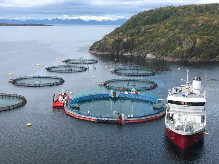 Stocking the 400-tonne capacity Flexifarm system