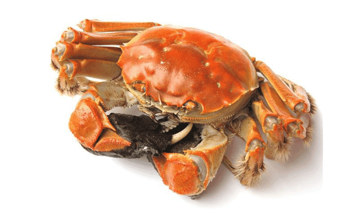 The hairy crab, also known as the Chinese mitten crab.