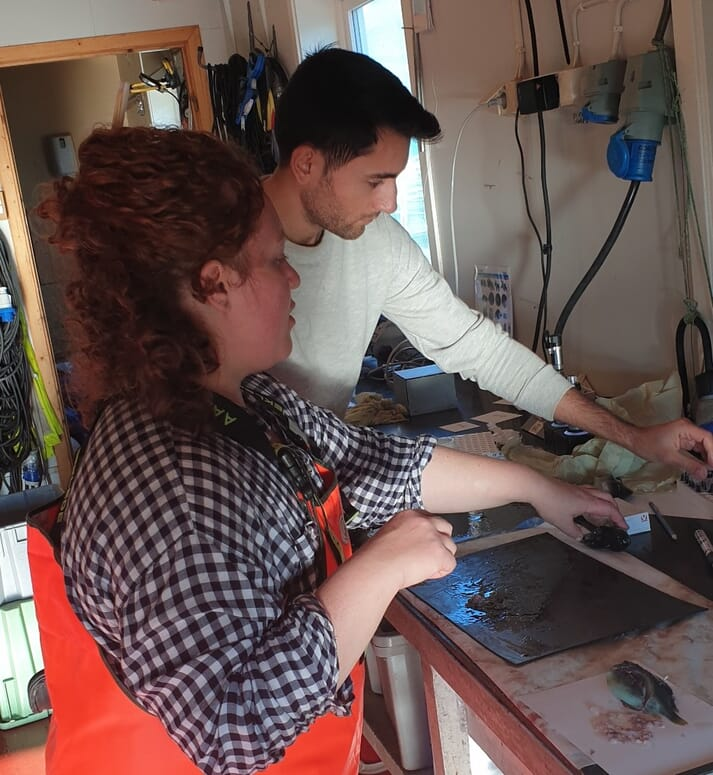 Assessing the stomach contents of the lumpfish