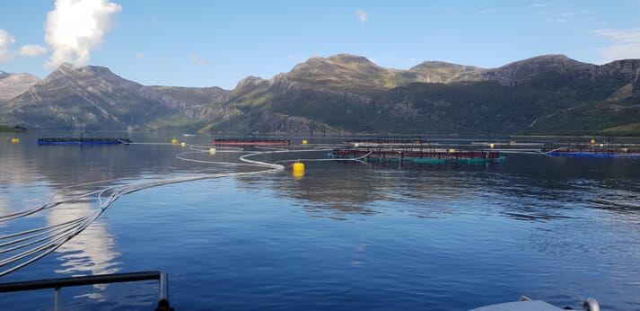 The trial took place under commercial salmon farming conditions