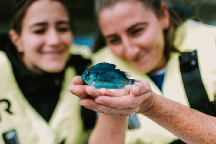 BioMar has high hopes for its new range of lumpfish diets