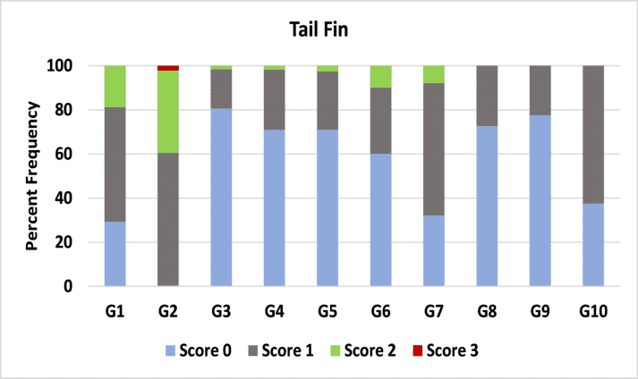 """Percent frequency of damage to the tail fin for each group. Scoring follows a scale from """"0"""" to """"3"""" for each sub-category."""