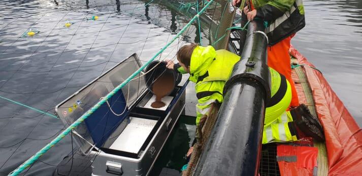 An automated lumpfish pellet feeder
