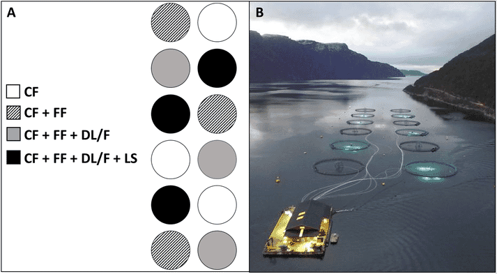 Fig. A) Diagrammatic representation of the Centre for Aquaculture Competence study site and experimental design. Each circle represents a 120 m circumference sea cage, with shade representing anti-lice strategy. CF = cleaner fish, FF = functional feed, DL/F = deep light and deep feeding, LS = lice skirts. B) Aerial view of the study site at dusk with underwater light treatments clearly visible in cages.