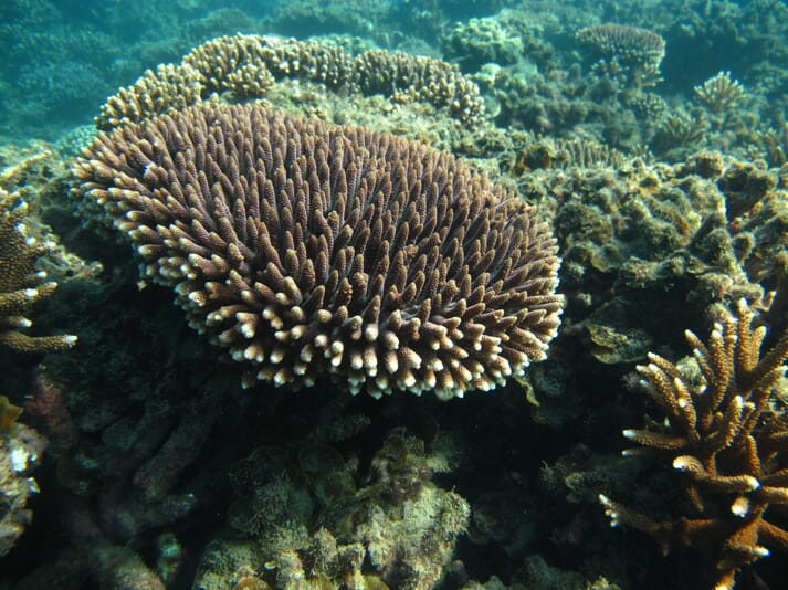 The study found that a number of invertebrates, including corals, worms and molluscs, can synthesise omega-3 fatty acids
