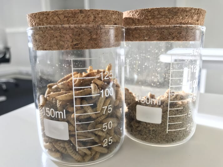 Dried soldier fly larvae and insect meal.