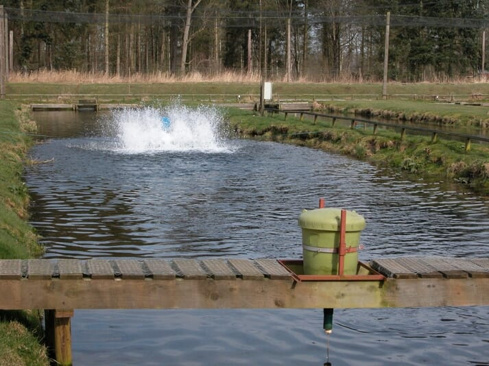 paddle wheel turning and aerating the water at a rainbow trout farm