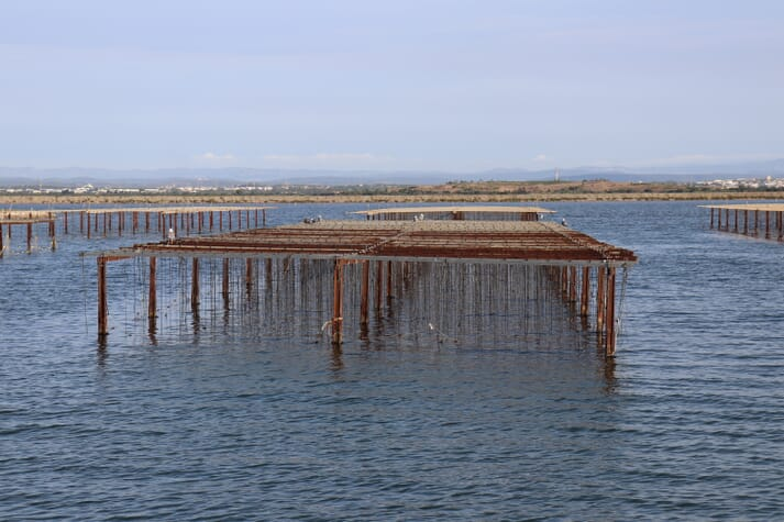 EU shellfish farming has a turnover of  €1.1 billion a year, compared to €2,731 million for marine finfish and €1,028 million for freshwater species