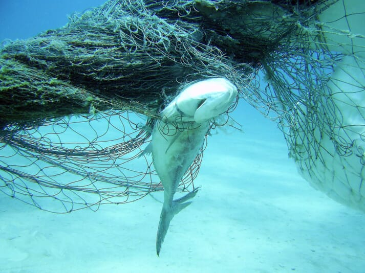 Lost or abandoned fishing gear kills millions of sea creatures each year