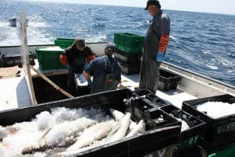 Commercial fishermen collect seafood on the US Great Lakes.