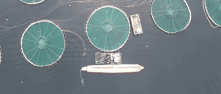 overhead view of ocean farm with a barge and tow bag in the foreground