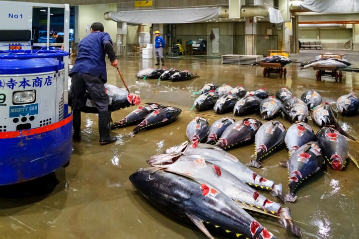 Tuna in a fish market in Japan