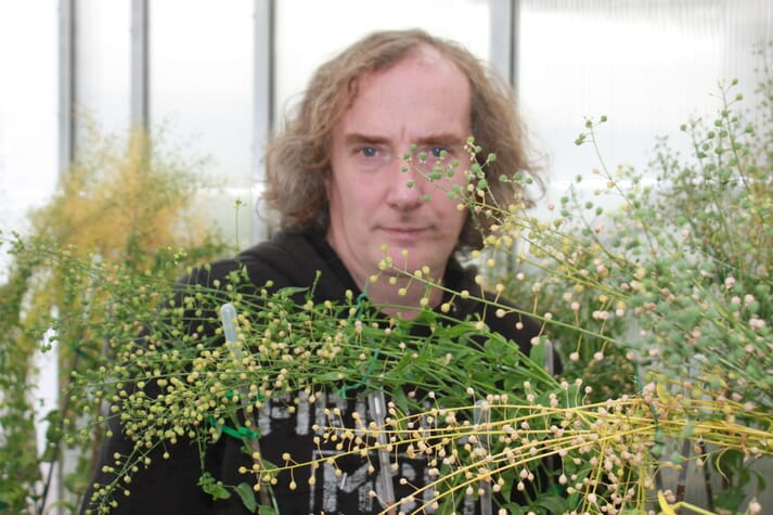 Professor Johnathan Napier with some of his GM camelina plants at Rothamsted Research, in Hertfordshire.