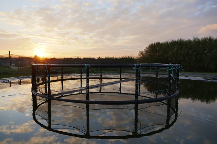 The duck pens have been designed by Kames Fish Farming and Fusion Marine