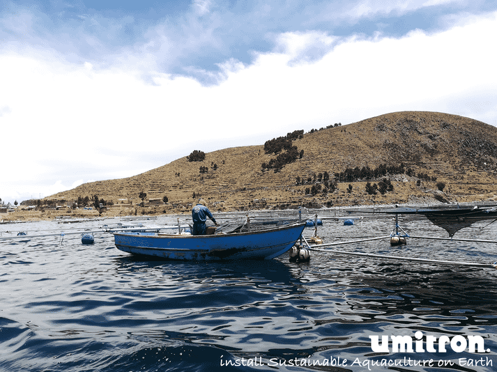 Lake Titicaca, which has a stable year-round temperature and clean, clear waters has the perfect conditions for growing rainbow trout