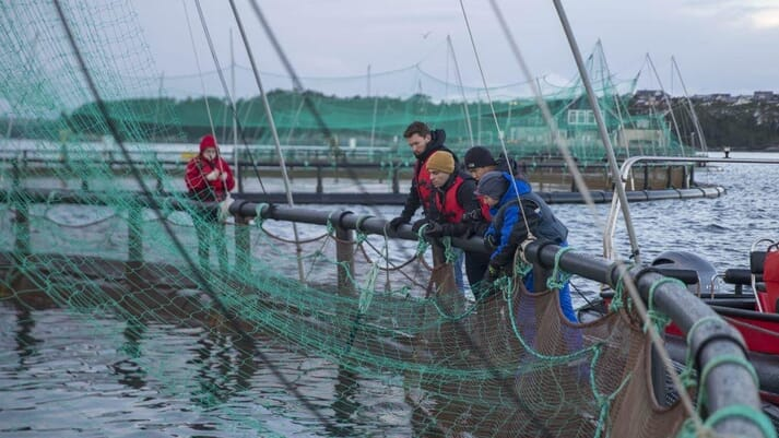 Chen and Constantino learned a great deal about salmon farming when touring the west coast of Norway