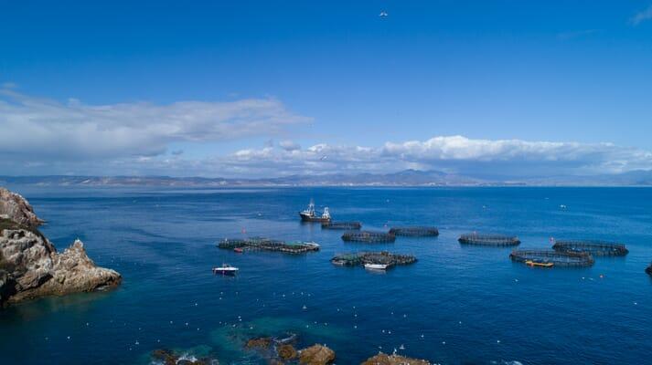 Pacifico Aquaculture produces striped bass in Baja California, Mexico