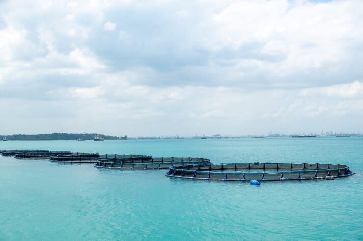Aerial view of near-shore barramundi cages