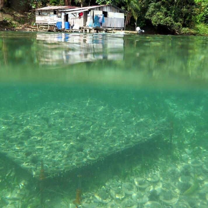 Coral farm managed by a local family for Bocas Mariculture in Panama