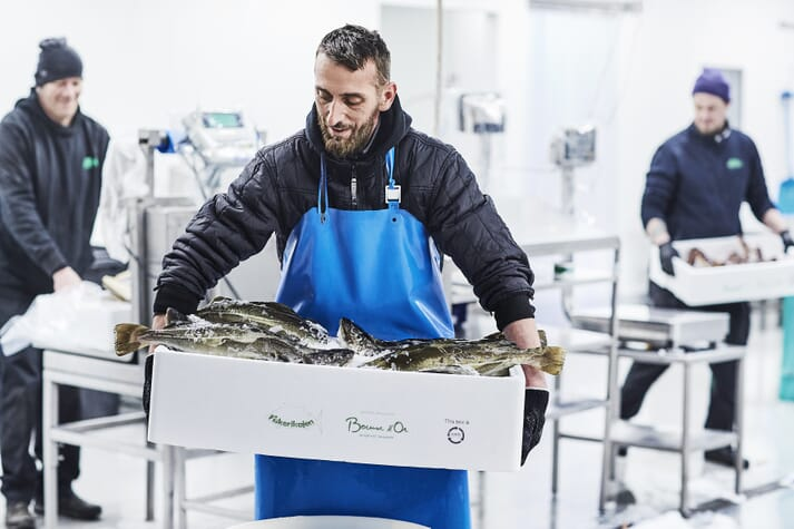 Norcod aims to harvest 10,000 tonnes of farmed cod in 2022