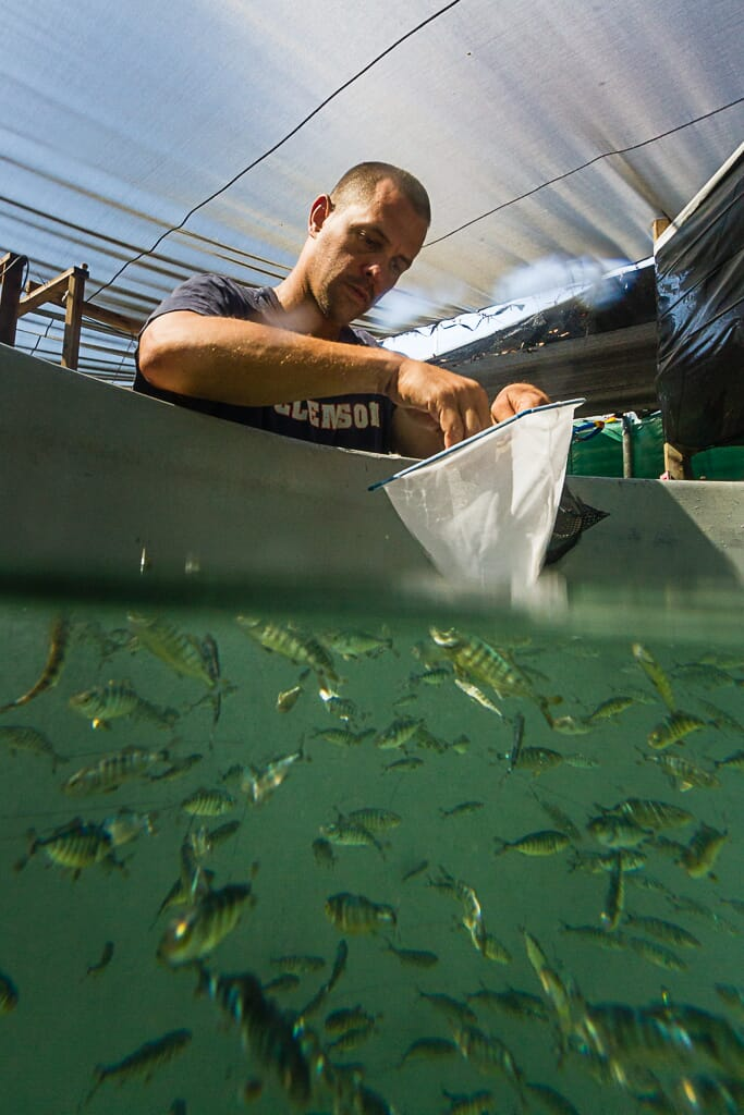 Hubbs-SeaWorld Research Institute Research Scientist Kevin Stuart conducting a study to replace fishmeal and fish oil in the diet of juvenile California yellowtail