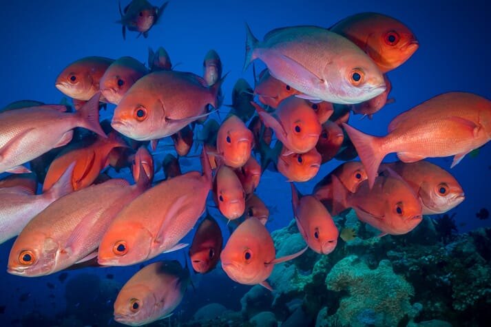Two of the eight successful aquaculture grant bids relate to red snapper production