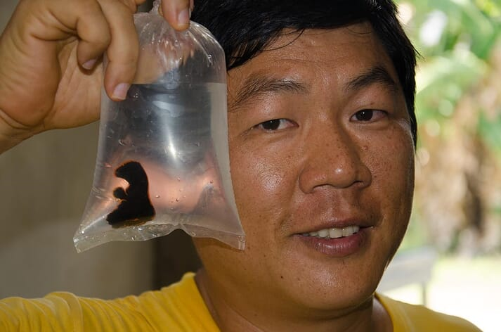 Wen-Ping Su holding one of his first captive bred batfish