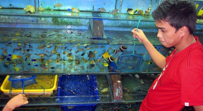 Wild caught ornamental fish for sale in Manila (Philippines)