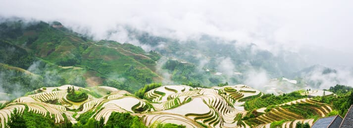 Rice-fish culture is perfectly suited to terraced hillsides