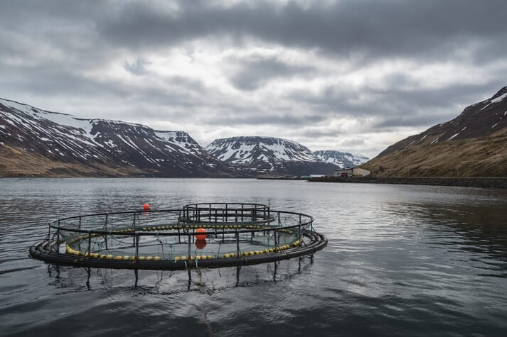 Arnarlax intends to harvest 10,000 tonnes of salmon in 2019