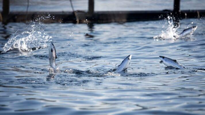 Cermaq feels betrayed by Canada's fisheries minister, Bernadette Jordan