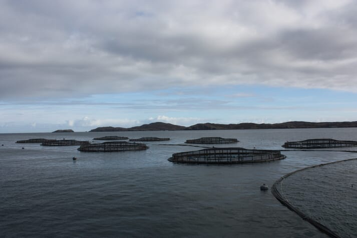 Salmon farming generated export sales of £519 million in the first 10 months of 2017