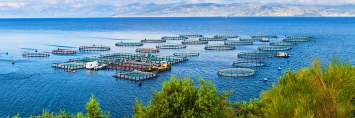 A sea bream and bass farm in the Mediterranean