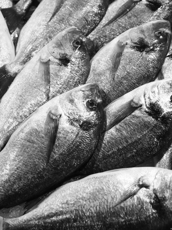 Sea bream accounted for 82 percent of Oman's aquaculture landings in 2019