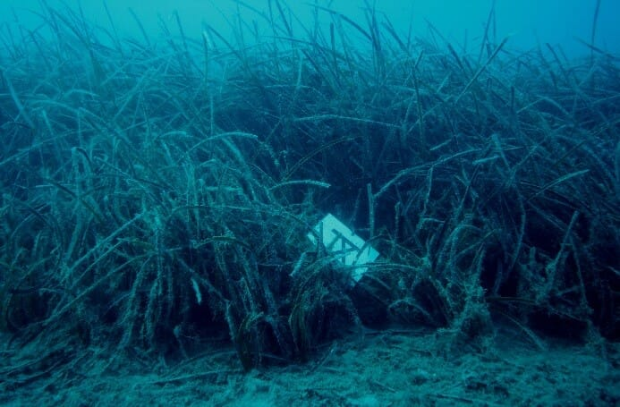 The same marker five years later in 2017 shows progression of the seagrass meadow's edge