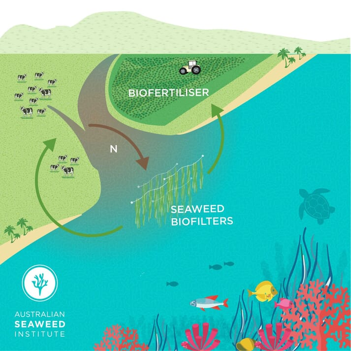 Diagram of the Australian Seaweed Institute's project in collaboration with The Great Barrier Reef Foundation