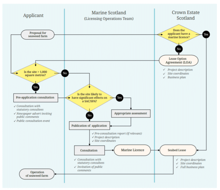 The key stages of the application process for setting up a seaweed farm in Scotland (click on image to enlarge)
