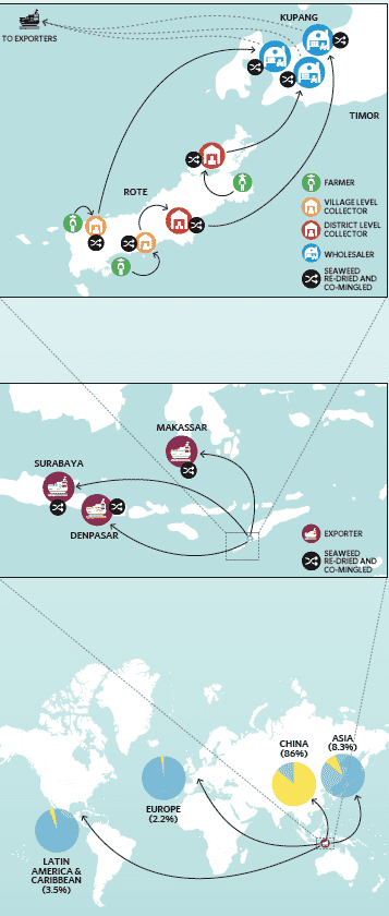 The seaweed supply chain in Indonesia