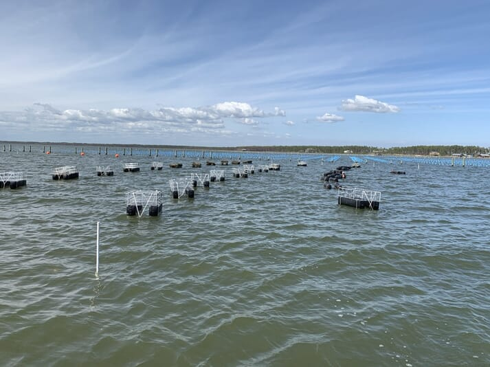 OysterGro cages in the desiccation position in Bayou Heron, Alabama