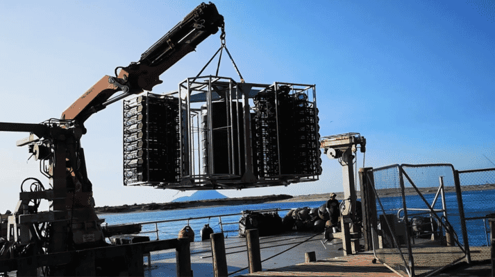 The shellfish tower was trialled by Whakatōhea Mussels