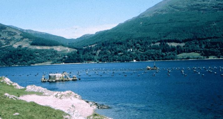 A mussel farm on Loch Striven
