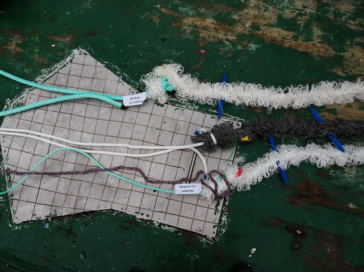 Two types of bio-based ropes are now being trialled alongside conventional, plastic ones at mussel and seaweed farms in Spain