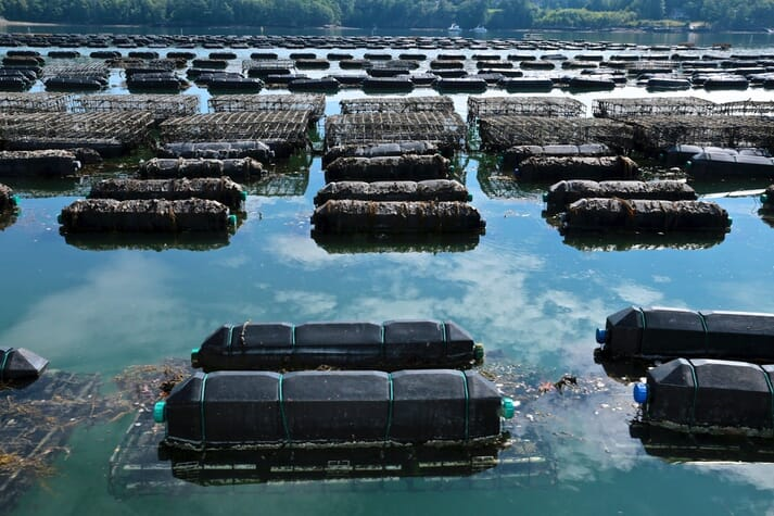Floating oyster-growing platforms