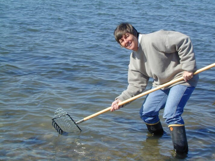 Sandy Shumway, a research professor at the University of Connecticut since 2002, raking clams in New England