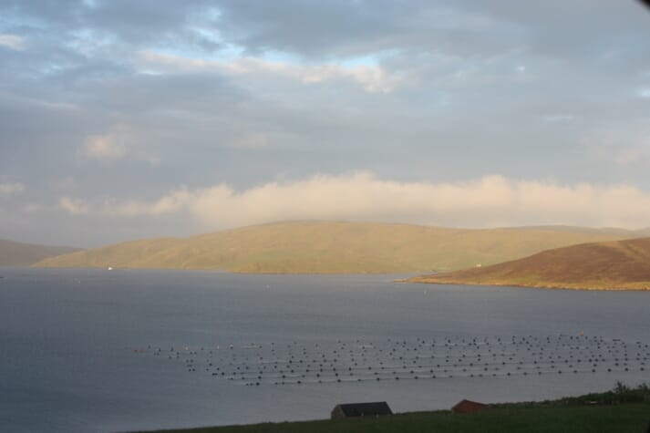 Just 5 percent of the seas inside Shetland's six-mile limits is dredged