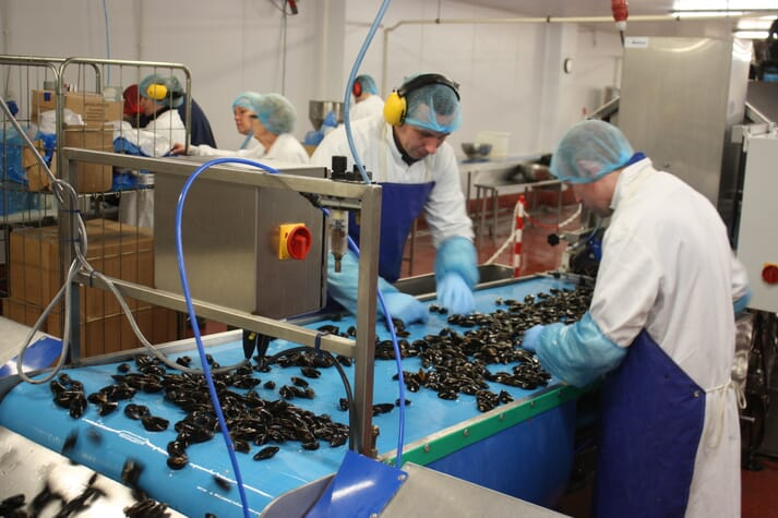 According to the report only 25 percent of global seafood products are either certified or rated as sustainable, putting these rope-grown Scottish mussels in the minority