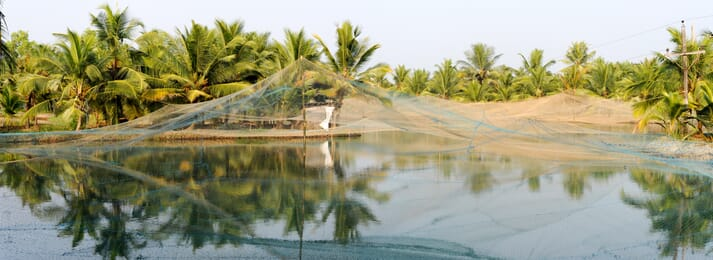 Aquaculture producers in India should consider producing a crop of finfish between shrimp cycles  according to new research