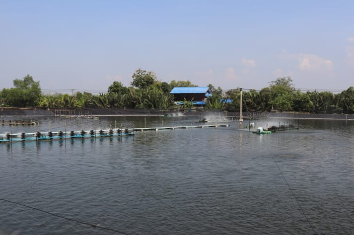 A shrimp farm in Thailand