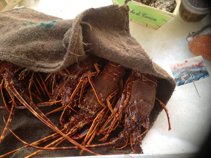 Plate 1: spiny lobsters for sale for for euro 65/kg in Corsica